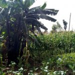 The Water Project: Indete Community, Udi Spring -  Banana Trees And Farm
