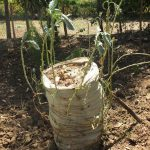The Water Project: Vilongo Community -  Vilongo Community Tree And Vegetable Farming