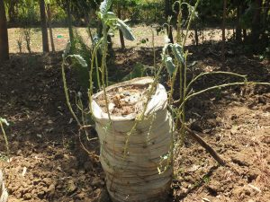 The Water Project:  Vilongo Community Tree And Vegetable Farming