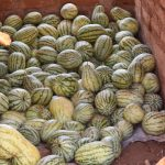 The Water Project: Ngitini Community C -  Watermelons