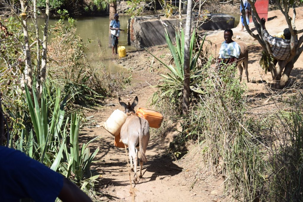 The Water Project : kenya18193-donkey-carrying-water