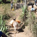 The Water Project: Ilinge Community E -  Donkey Carrying Water