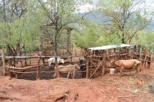 The Water Project:  Cattle Pen