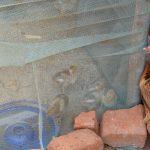 The Water Project: Utini Community -  Raising Chicks