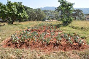The Water Project:  School Garden