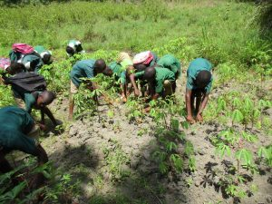 The Water Project:  Students Weeding In School Garden