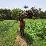 The Water Project: Moniya Community -  Carrying Wood