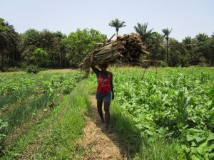 The Water Project:  Carrying Wood