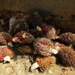 The Water Project: Moniya Community -  Palm Fruit