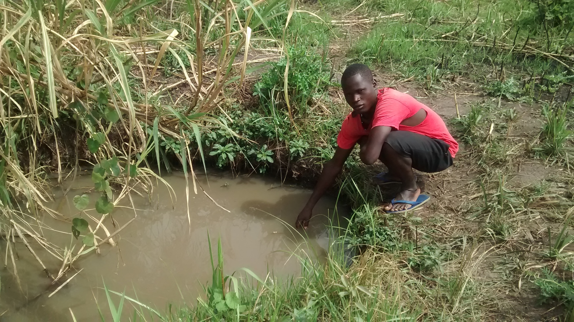The Water Project : uganda18292-collecting-water-from-dirty-open-source