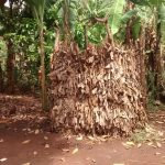 The Water Project: Pakanyi Gwoki Community -  Latrine Made With Banana Leaves
