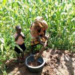 The Water Project: Burachu B Community, Shitende Spring -  Preparing Materials For Artisan