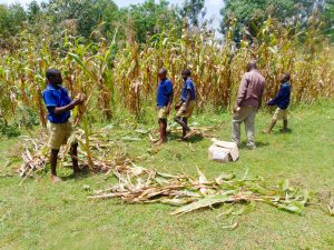 The Water Project:  Teachers And Pupils Getting Maize To Cook For Our Artisans