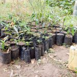 The Water Project: Muselele Community A -  Tree Saplings