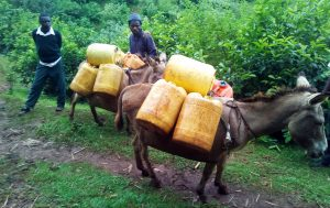 The Water Project:  Donkeys Carrying The Water