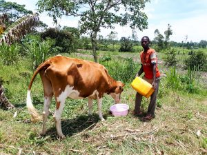 The Water Project:  Man Watering His Cow