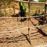 The Water Project: Ematetie Community, Chibusia Spring -  Fence Protecting The Spring Box