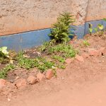 The Water Project: Kyanzasu Secondary School -  New Flowers Planted At The School