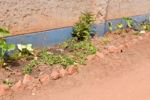 The Water Project:  New Flowers Planted At The School