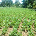 The Water Project: Mwichina Community, Matanyi Spring -  Community Farm