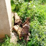 The Water Project: Majengo Primary School -  Logs Blocking A Dangerous Hole By The Latrines
