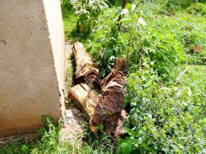The Water Project:  Logs Blocking A Dangerous Hole By The Latrines