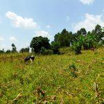 The Water Project: Ngeny Barak Community, Ngeny Barak Spring -  Community Landscape