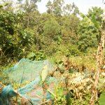 The Water Project: Sichinji Community, Makhatse Spring -  Collard Green Garden