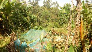 The Water Project:  Collard Green Garden