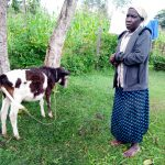 The Water Project: Bukhakunga Community, Khayati Spring -  Leonida Showing Us The Calf She Is Raising