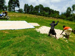 The Water Project:  Drying Maize