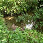 The Water Project: Kinuma Kyarugude Community -  The Old Open Water Source