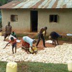 The Water Project: Musango Community, Emufutu Spring -  Drying Maize
