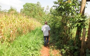 The Water Project:  A Man Walking Through His Maize Farm