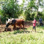 The Water Project: Sambuli Community, Nechesa Spring -  Plowing A Farm