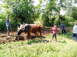 The Water Project:  Plowing A Farm