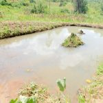 The Water Project: Emukoyani Community, Ombalasi Spring -  Fish Pond