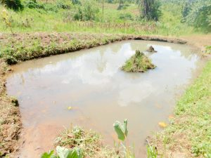 The Water Project:  Fish Pond