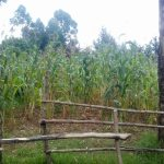 The Water Project: Koitabut Primary School -  Farms Around The School