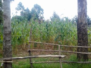 The Water Project:  Farms Around The School