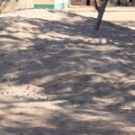 The Water Project: Kakunike Primary School -  Sand Collected For Tank Construction