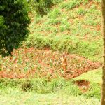 The Water Project: Mutao Community, Kenya Spring -  Water From Spring Is Used On Farms