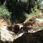The Water Project: Shitirira Community, Peninah Spring -  Spring Construction