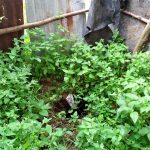 The Water Project: Shihungu Community, Shihungu Spring -  An Overgrown Latrine