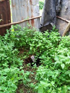 The Water Project:  An Overgrown Latrine