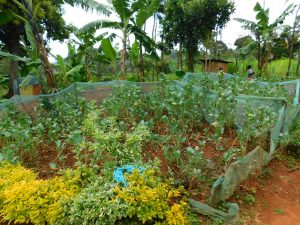 The Water Project:  Family Garden
