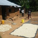 The Water Project: Emukangu Community, Okhaso Spring -  Grains Drying
