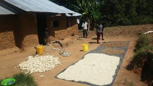 The Water Project:  Grains Drying