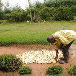 The Water Project: Shisere Community, Richard Okanga Spring -  Drying Maize