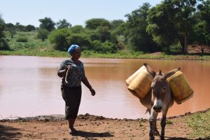 The Water Project:  Donkey Carries Water Home